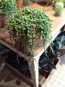plante til vandområde 2 (2)