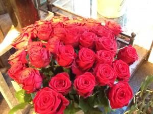 røde roser 1