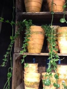 plante til vandområde 4